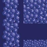 Blaubeernahtloser Musterhintergrund Stockbild