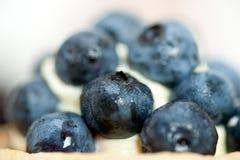 Blaubeersahnekleiner kuchen Stockfotografie