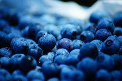 Blaubeersammeln in der Sommerzeit so köstlich und nahrhaft! stockbilder