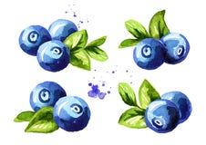 Blaubeerzusammensetzungen eingestellt Frische Beeren mit Blättern Übergeben Sie die gezogene Aquarellillustration, die auf weißem stock abbildung