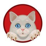 Blaue Augen des weißen Kätzchens Stockfotos