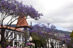 Blaue Bäume in Funchal Lizenzfreie Stockfotografie
