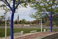 Blaue Bäume in im Stadtzentrum gelegenem Denver Lizenzfreie Stockfotografie
