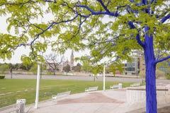 Blaue Bäume in im Stadtzentrum gelegenem Denver Stockfotos