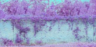 Blaue Backsteinmauerbeschaffenheit mit purpurroten Betriebsblättern Stockbilder