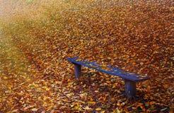 Blaue Bank im Herbstwald mit Strahlen des Lichtes Stockfotografie