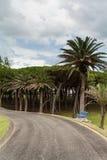 Blaue Bank und Straße in den Gärten des Magdalena-Palastes Stockfoto