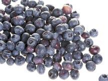 Blaue Beeren auf weißem Hintergrund Stockfoto