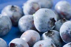 Blaue Beeren in einer blauen Schüssel Stockbild