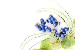 Blaue Beeren von mondo Gras Stockfotografie