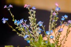 Blaue Blütenpflanzen in einer Bonsaibaumshow lizenzfreies stockbild