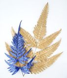 Blaue Blattgestaltungselemente Dekorationselemente für Einladung, Hochzeitskarten, Valentinsgrußtag, Grußkarten Lokalisiert auf w Stockbild