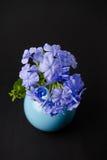 Blaue Bleiwurzblumen Lizenzfreies Stockbild