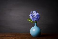 Blaue Bleiwurzblumen im Vase Stockbild