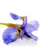 Blaue Blende Stockfotografie
