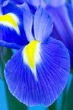 Blaue Blende Stockbild