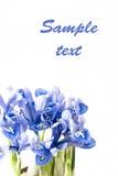 Blaue Blenden Stockfotos