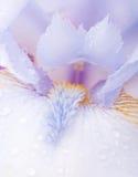 Blaue Blenden Lizenzfreies Stockbild