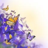 Blaue Blenden Stockbild