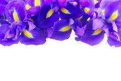 Blaue Blenden-Blumen Stockfotos