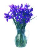 Blaue Blenden-Blumen Stockfotografie