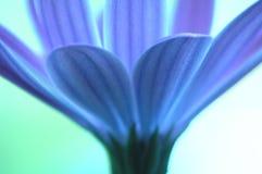 Blaue Blume Stockfotografie