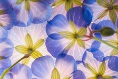 Blaue Blume Lizenzfreie Stockbilder