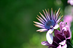 Blaue Blume Stockfoto