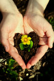 Blaue Blume in den Händen Lizenzfreies Stockfoto