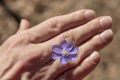 Blaue Blume in der Hand des Mannes stockfoto
