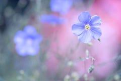Blaue Blume des Flachses auf einem empfindlichen rosa Hintergrund Allein gefrorener Baum Hintergrund des Flachses im Freien mit R Lizenzfreie Stockbilder