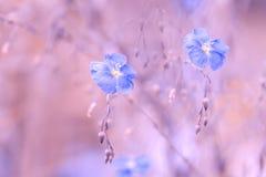 Blaue Blume des Flachses auf einem empfindlichen rosa Hintergrund Allein gefrorener Baum Hintergrund des Flachses im Freien mit R Lizenzfreie Stockfotografie