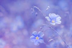 Blaue Blume des Flachses auf einem empfindlichen rosa Hintergrund Allein gefrorener Baum Hintergrund des Flachses im Freien mit R Stockfotografie