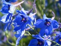 Blaue Blumen stockbild