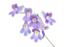 Blaue Blumen Stockfotos