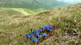 Blaue Blumen auf Bergabhang stockbilder