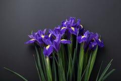 Blaue Blumen auf schwarzem Hintergrund Stockbilder
