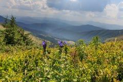 Blaue Blumen in den Bergen Stockfotografie