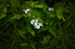 Blaue Blumen fokussiert in der Mitte Stockfotos