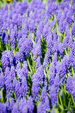Blaue Blumen im Park stockfotos