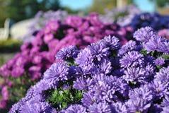 Blaue Blumen am Markt Lizenzfreies Stockfoto