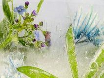 Blaue Blumen und Blätter im Eis Stockfotos