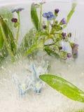 Blaue Blumen vergessen-ich und Blätter im Eis Lizenzfreies Stockbild