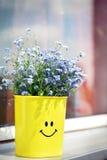 Blaue Blumen (vergessen Sie mich nicht) Lizenzfreie Stockfotos
