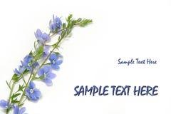 Blaue Blumen (Vergissmeinnichte) Stockfotografie