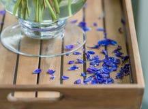 Blaue Blumenblätter gefallen vom Blumenstrauß Lizenzfreies Stockfoto