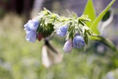 Blaue Blumenglocken Natursommer Lizenzfreie Stockbilder