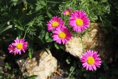Blaue Blumennahaufnahme auf einem Hintergrund des frischen Gr?ns stockfotos