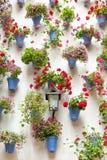 Blaue Blumentöpfe und rote Blumen auf einer weißen Wand mit Weinlese lan Stockbild