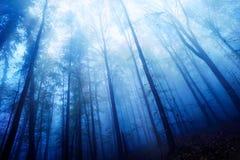 Blaue Dämmerungsstimmung in einem nebeligen Holz Lizenzfreies Stockbild
